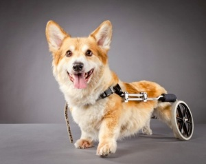 petswithdisabilities01